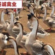 广西英诚农业发展有限公司