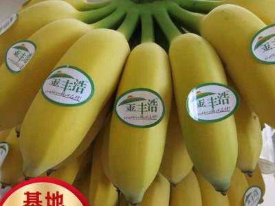 香蕉苗 香蕉批发市场 香蕉价格