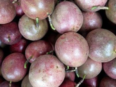 广西百香果 新鲜大果原浆鸡蛋果果酱 百香果批发 百香果种植基地