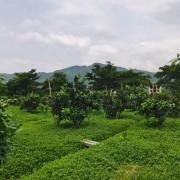 博白县丰和进农业开发有限公司