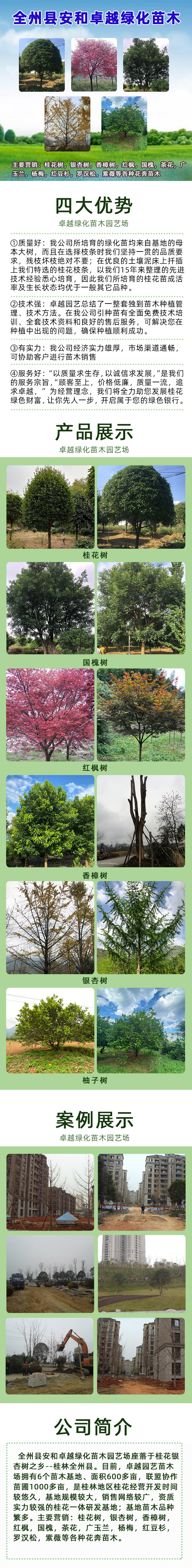 1019 全州县安和卓越绿化苗木园艺场.jpg